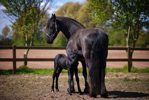 Koně jako relax i sport