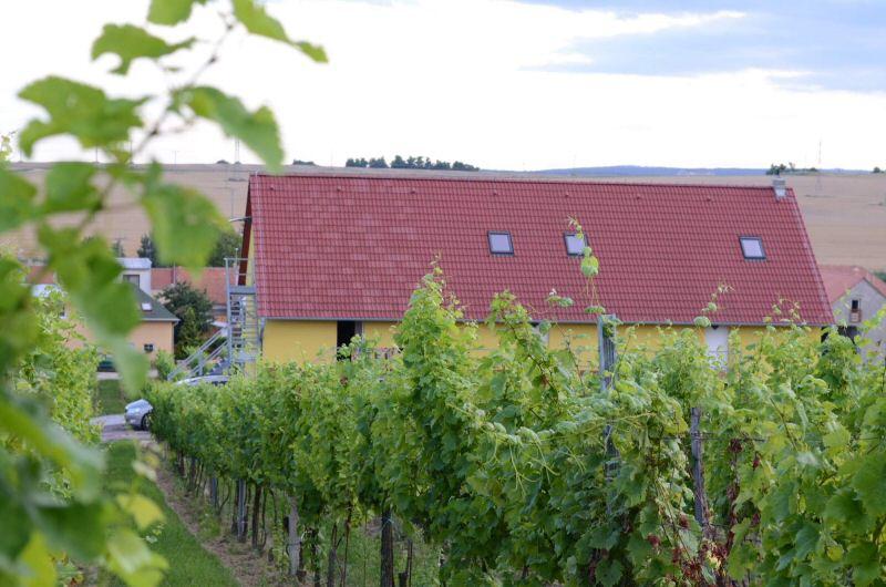 Dovolená uprostřed vinohradu