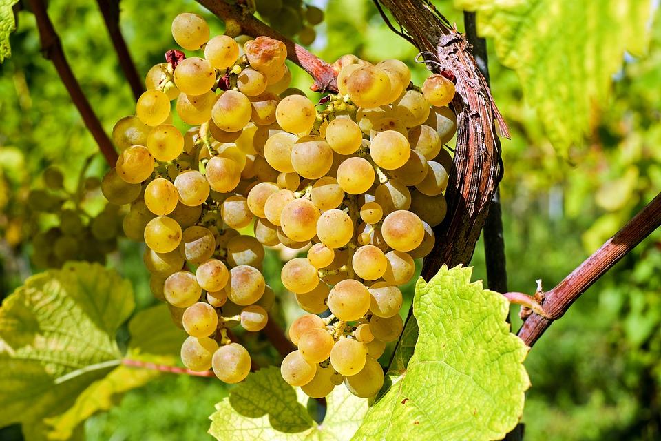 Jak správně porozumět vínům