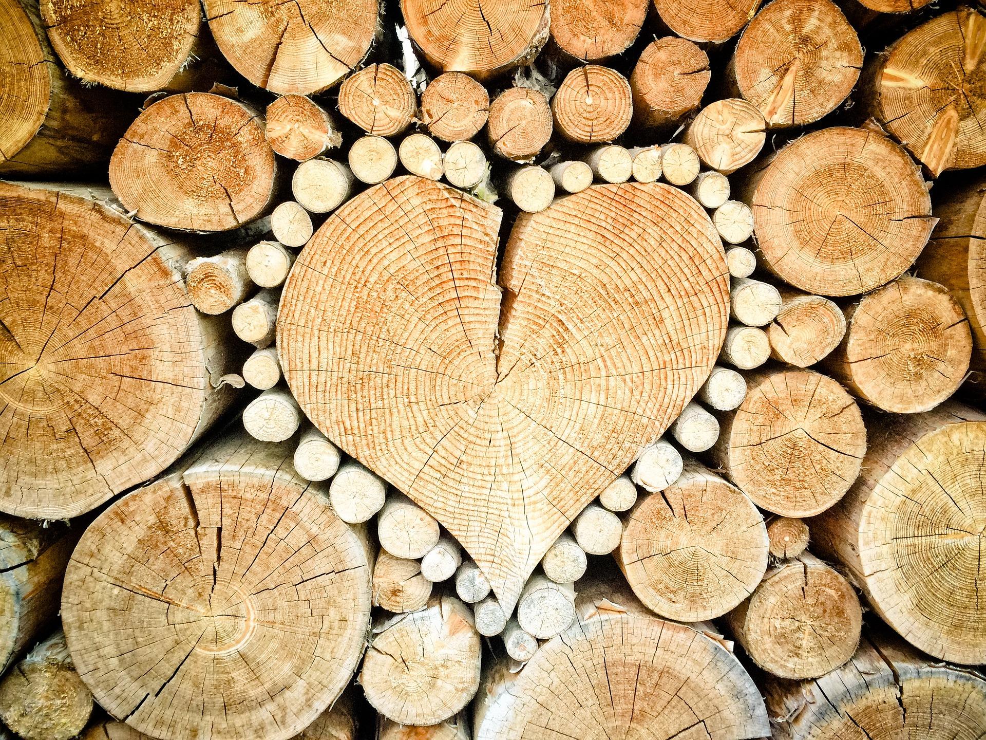 Obce se starají o lesní hospodářství