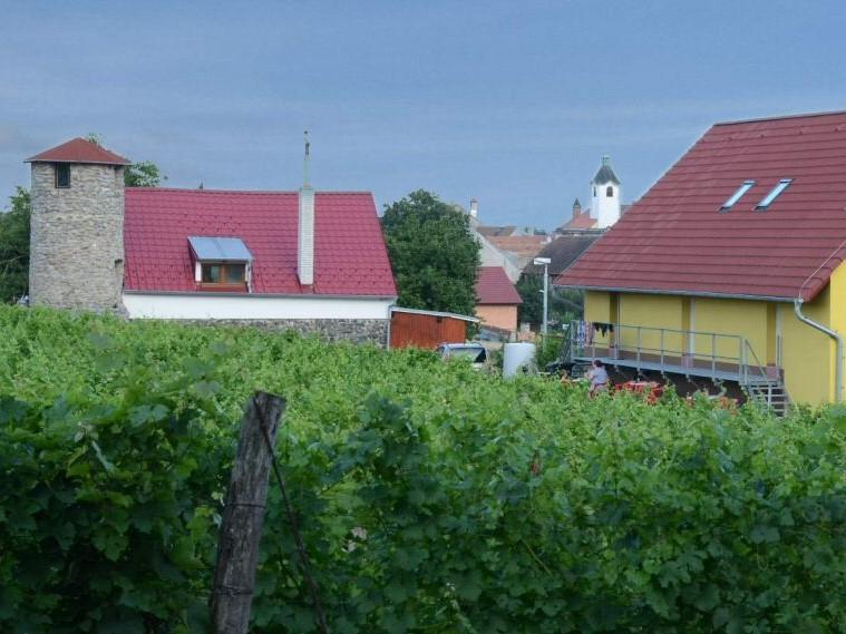 Za odpočinkem na vinohrady